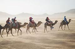 TV deserto camelos 0,25MP.jpg
