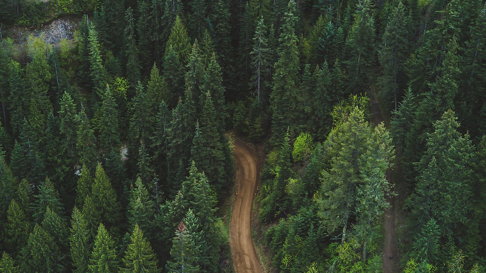 forest_aerial_view_road_133263_1920x1080