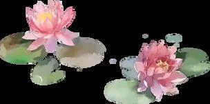 lotus-bg.webp