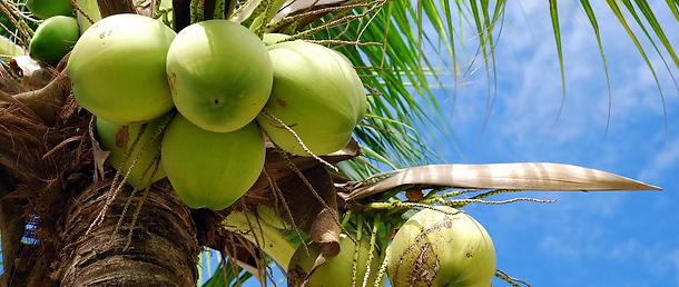 coconut-oil-massage8.webp