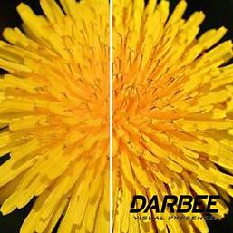 Darbee.png