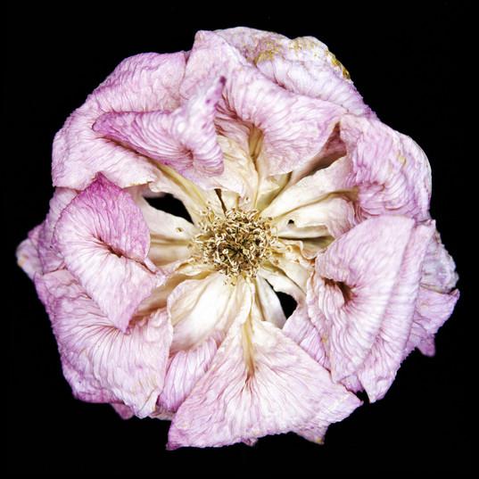 꽃 (flower)