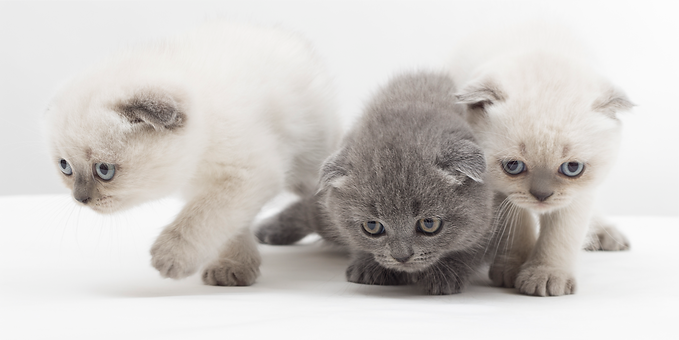 Kittens_edited.png
