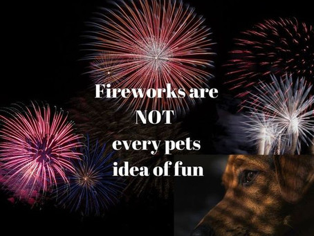 Bonfire night Fireworks and Dogs