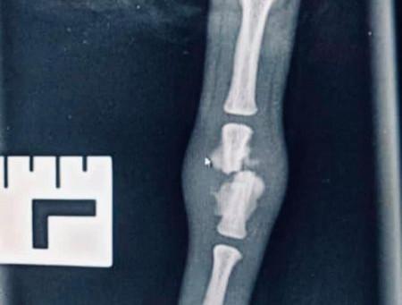 Broken tail / Limp Tail