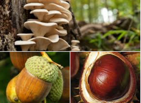 Acorns Conkers and Antifreeze toxic to pets
