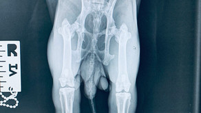 My Rabbit needs a X-ray