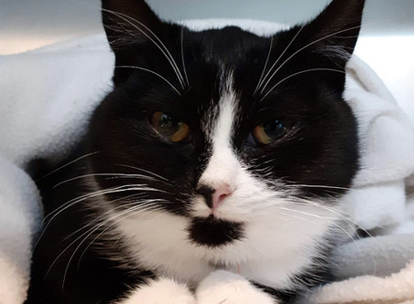 Stressed cat Urinary stress