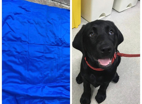 Dog Cooling mat toxic