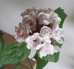 Glory Flower