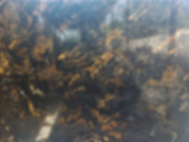 Granito Metallicus.jpeg