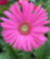 04-fleur-annuelle-560-660.jpg