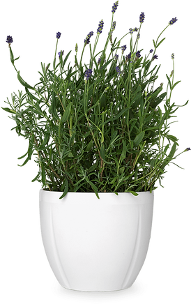 58-584131_flower-pot-png-transparent-flo
