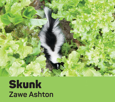 Skunk cover homepage crop.jpg