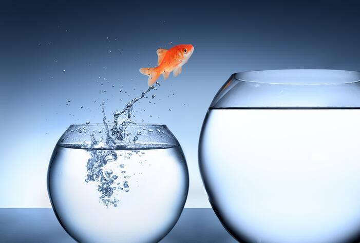 Goldfish Jumping from a Small Fishbowl into a Larger Fishbowl