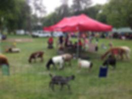Mobile petting zoo