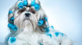Вопросы,связанные с купанием собак. Развеем некоторые мифы!