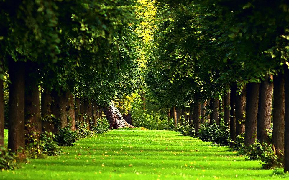 890850-free-download-beautiful-forest-wa