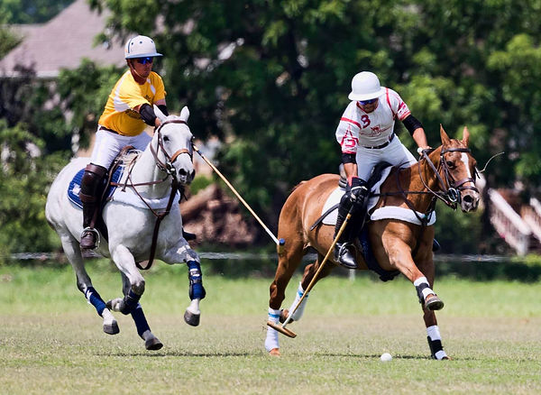 Best Field Photo Polo.jpg