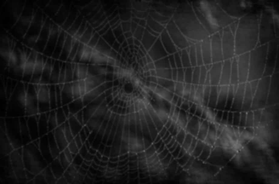 website_spider.JPG