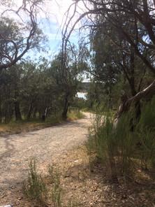 Lysterfield Lake Casuarina Track