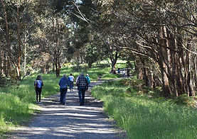 Upper Beaconsfield Social walking group