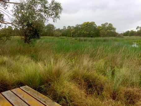 Toomuc Creek - Pakenham Walk