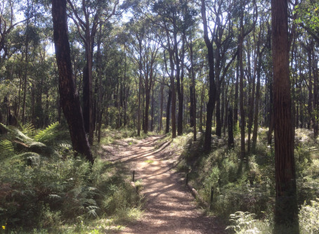 Wright Forest - Cockatoo Walk