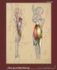 innerleg&thigh copy.jpg