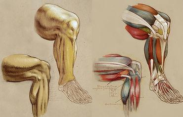 legs skin legs anatomy.jpg