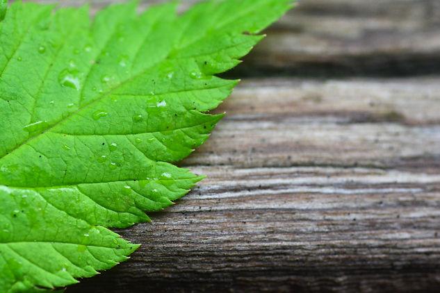 Leaf on wood.jpg
