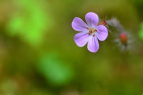 purple flower in green.jpg