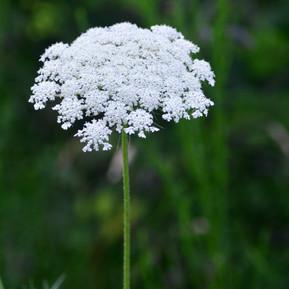 white flower square.jpg