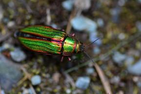 colourful bug.jpg