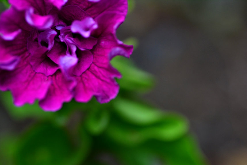 flower purple horizontal.jpg