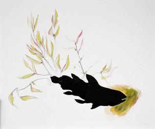 Latimeria chalumnae (Blumenreliquiar)