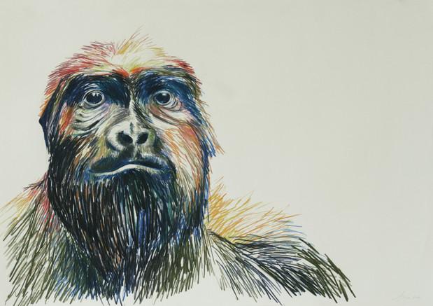 Relaxed Animals 2 (Gorilla)