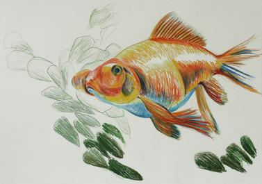 relaxed animals 1 (Goldfisch)