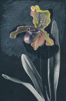 Organic flowers /1