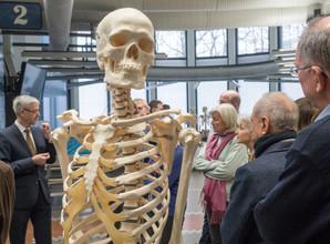 Skelett im Seziersaal des Anatomischen Instituts