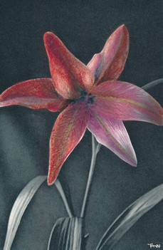 Organic flowers /3