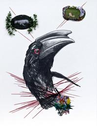 Humboldts Traum (Nashornvogel)