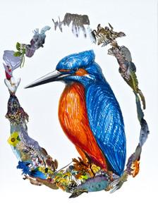 Humboldts Traum (Eisvogel)