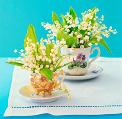 Lily of the Valley Teacups