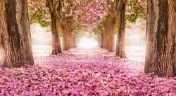 spring-season-wallpaper-005