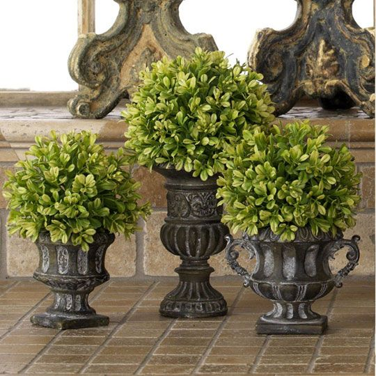 Boxwood Trio
