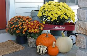 Wagon with Mums & Pumpkins
