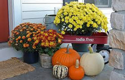 Wagon with Mums & Pumpkins