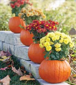 Pumpkins with Mums