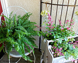 Fern & Florals